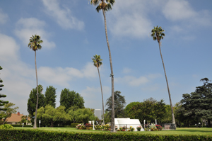 Beverlywood, CA